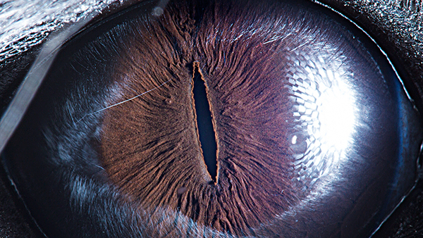 These Macro Shots of Animal Eyes Are Beautifully Striking