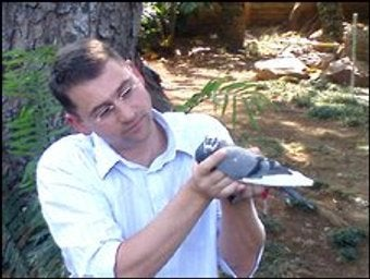 Bird Beats Broadband! Pigeon Flies 4GBs Faster than South African DSL