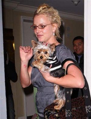 Britney Spears Drunk-Dials Her BabyDaddy