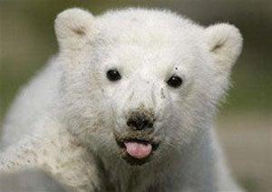 Making A Buck Off Knut