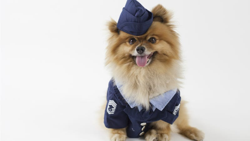 Dogs Are The Only People Worth Marketing Private Jets To Now