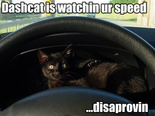 DashCat Doesn't Like Your Idiot Lights