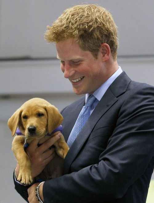 Prince Harry & Puppy Will Make Your Mind Explode