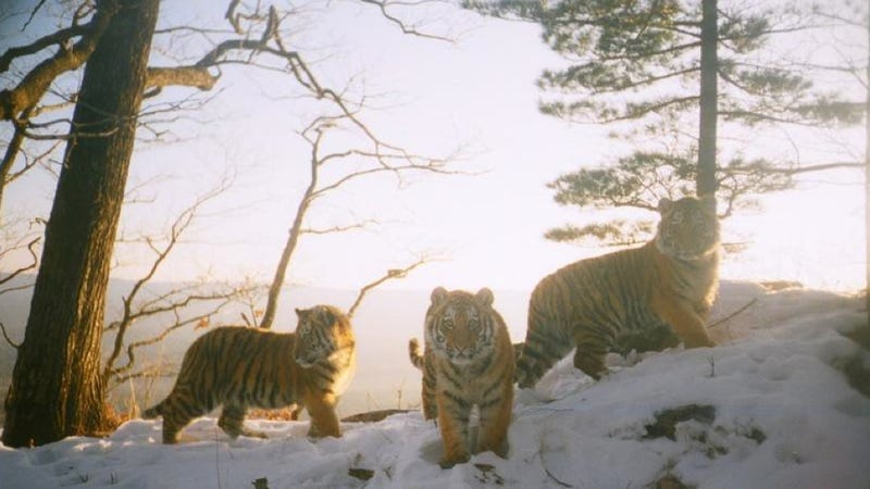 Our favorite photographs from this year's BBC Camera-trap Photo of the Year competition