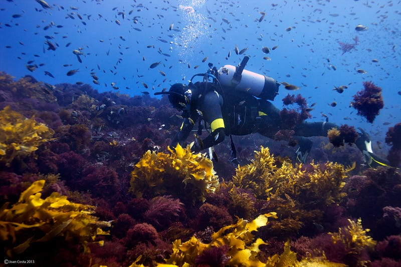 A Vast Underwater Forest Is Roasting to Death