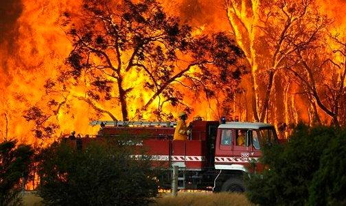 Australia's Agony