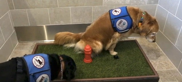 Detroit's Airport Just Installed a $75,000 Indoor Dog Bathroom