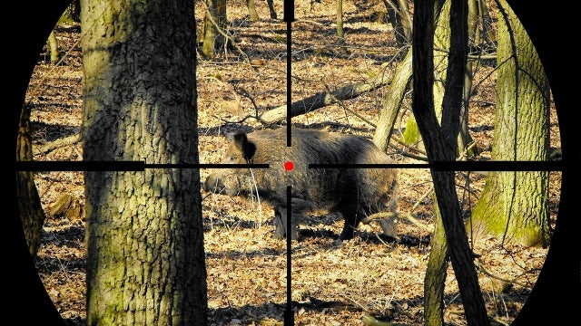 Hunter's Bullet Ricochets Off Boar, Kills Driver Over a Mile Away