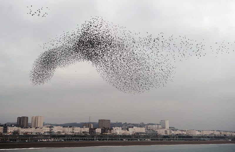 You Won't Believe These Patterns Created by Flocks of Birds in Flight