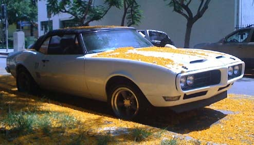 1967 Firebird Wears A Coat Of Orange Blossoms In West Hollywood