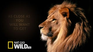 <em>Nat Geo Wild</em>'s  Radical Approach to Science TV: Being Truthful