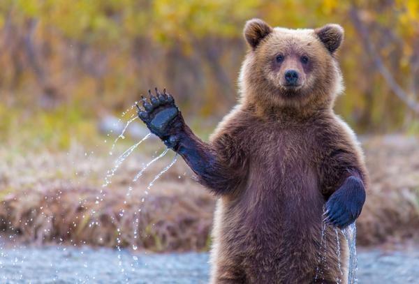 A Bear. Hey! Hi! GM's newest blog!