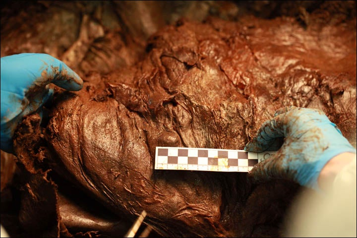 """Russian scientists: We have a """"high chance"""" of cloning a wooly mammoth"""