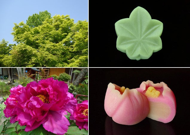 The Delicate Beauty of Japan Sweets Will Amaze and Delight You
