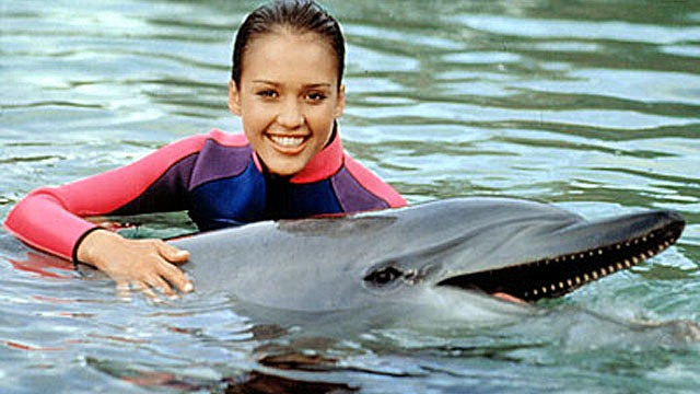 How to Talk to a Dolphin with an Underwater Translation Machine