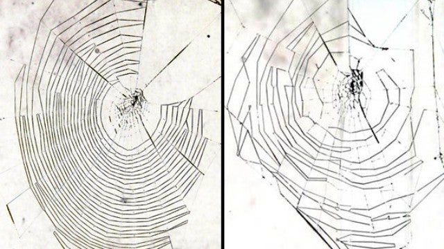 As spiders get older, their webs look worse and worse