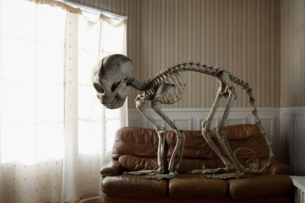 How did this giant animal skeleton get into a nice suburban home?