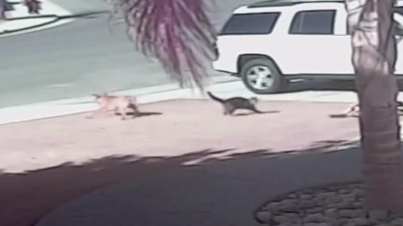 While Hero Cat Tara Enjoys New Life of Fame, Attacking Dog Is Put Down