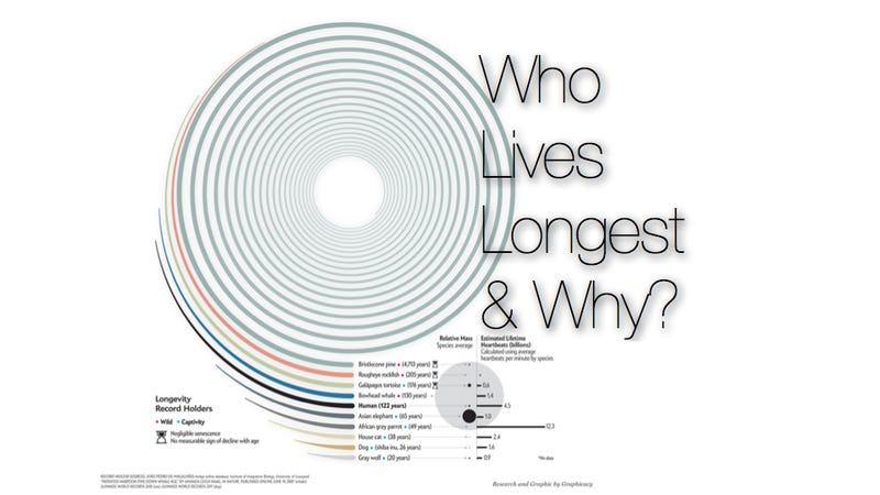 What is the secret to a long life?
