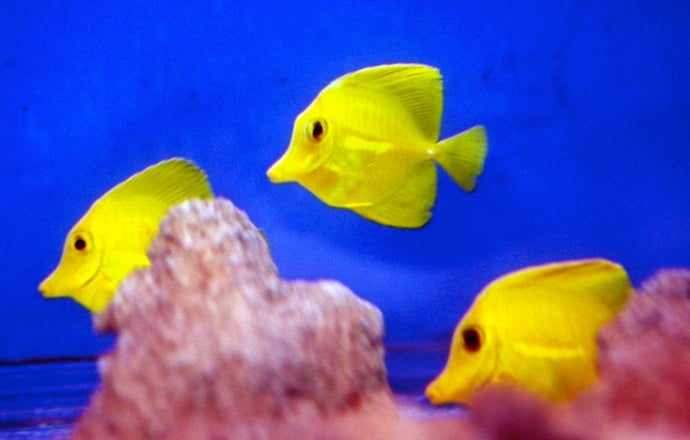 Brooklyn Man Murders Roommate's Fish Because He Just Really Doesn't Want Her To Move Out