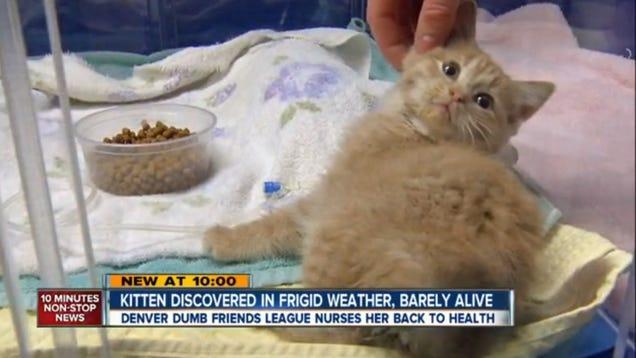 Elsa the Kitten, Found Half Frozen, Now Has a Permanent Home