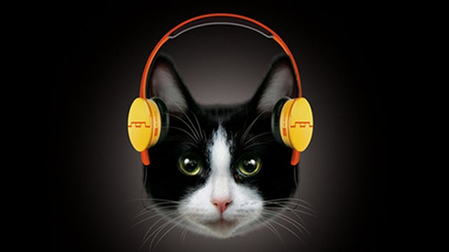 Yes, These Are $1000 Headphones For Cats