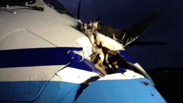 Here's What Happens When An Albatross Strikes A Japanese Coast Guard Plane