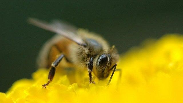 Behold the terrifying bite of a honeybee... wait, bite!?