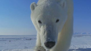 How the BBC uses tiny cameras to capture their incredible wildlife images