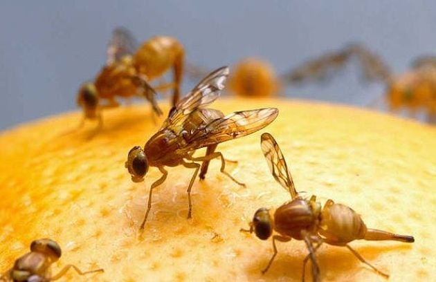 Even animals as simple as fruit flies have free will