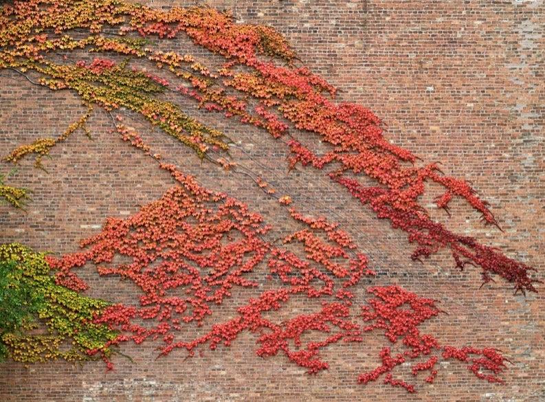 48 Stunning Photos of Fall