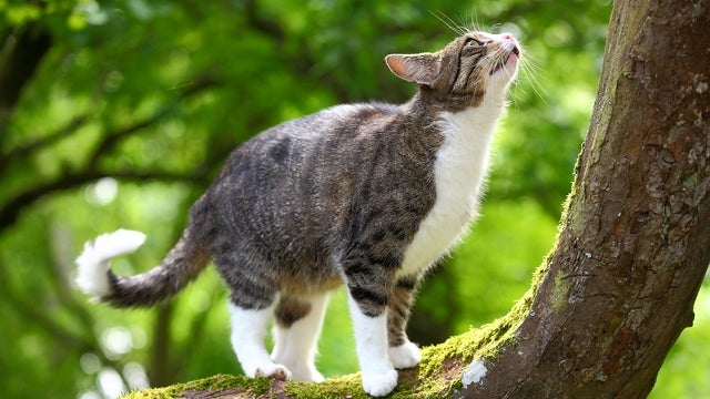 New Zealand environmental activist wants to ban cats as pets