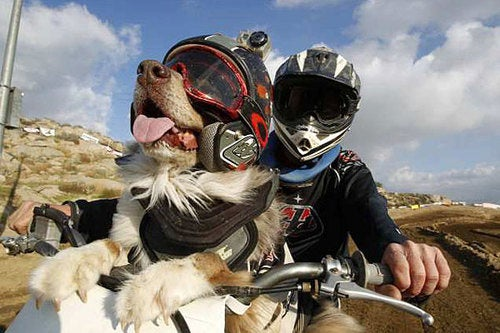 This Dog Likes Racing Dirt Bikes