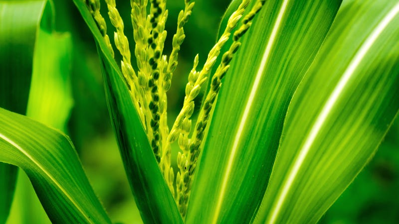 What Biofuel Is (And Where It Comes From)