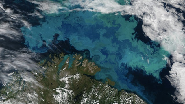 This is what a massive plankton bloom looks like from space