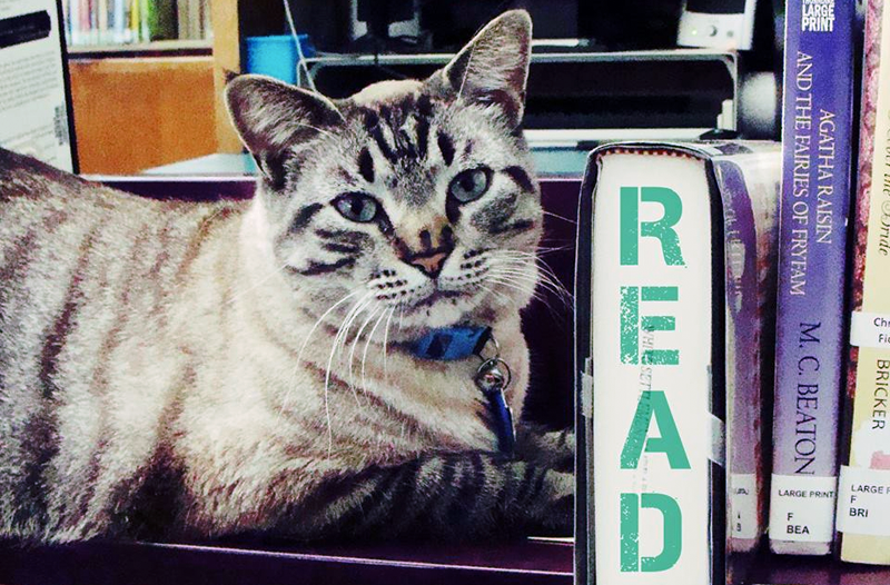 "Texas Library Cat Ousted From Office by ""Kitty-Hating"" City Hall"