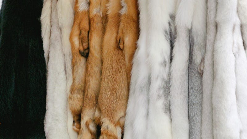 It's 1950 So It's Socially Acceptable To Cover Our Telephones In Mink