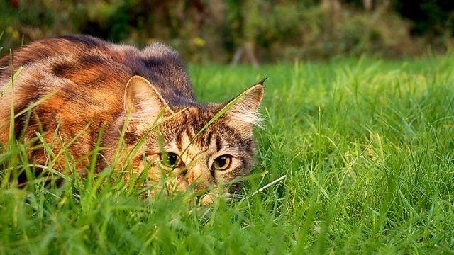 Did Wigner's Friend kill Schrödinger's Cat?