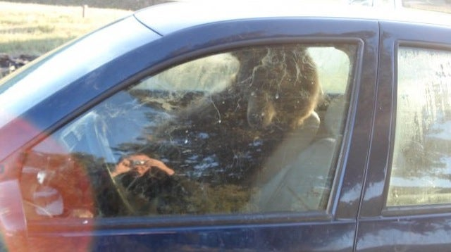 """""""I came out and a bear was crapping in my car and drinking my beer..."""""""