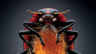 These parasite bugs can control their hosts&