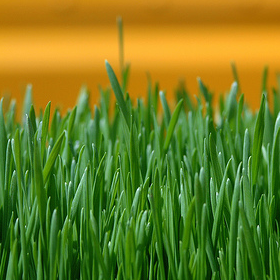 How to Water Your Lawn Efficiently