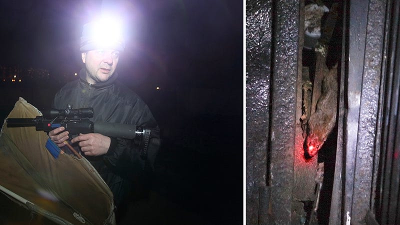 There's a Man with a Laser-Sighted Sniper Rifle Hunting Rats in Moscow