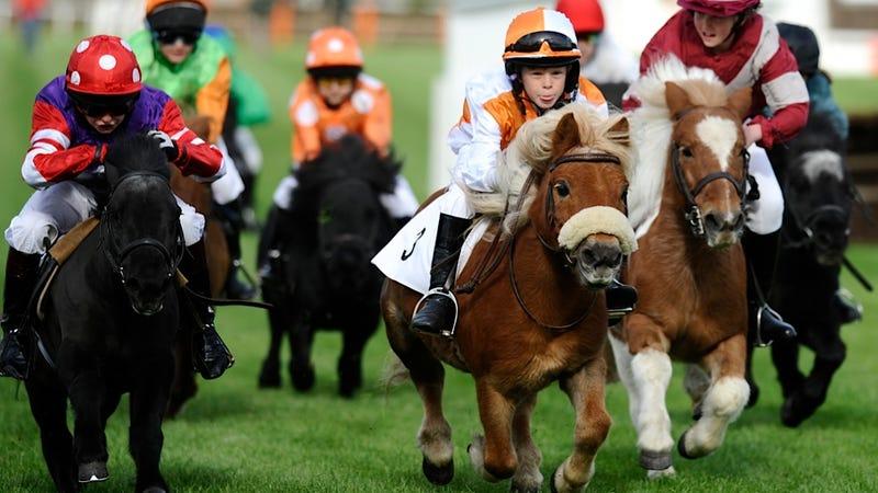 Shetland Pony Suckles Lamb, Ushers in Era of World Peace