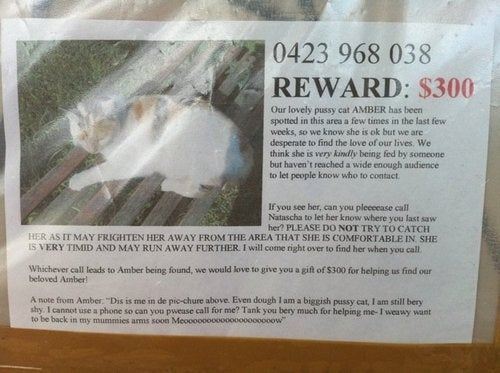 Lost Cat Asks For Help Locating Her Owner