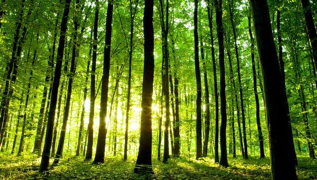 La deforestación acelera: solo quedan 422 árboles por cada ser humano