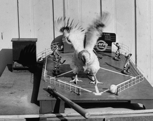 When Chickens Play Baseball, We All Win