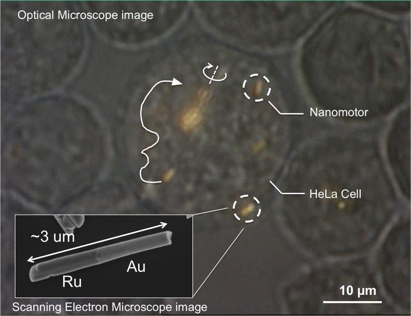 Researchers control nanomotors inside living cells for the first time