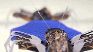 Estas hormigas-robot colaboran en tareas sencillas y se recargan solas