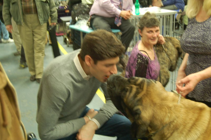 Calling Off The Dogs: Day 2 At Westminster