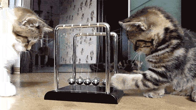 19 Adorable Animals Using Technology Adorably